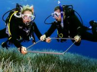 marine biology divers