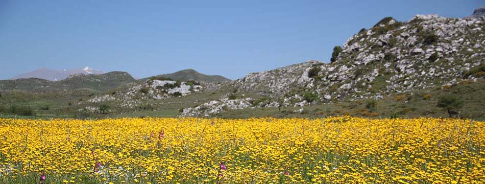 flowers and mountains in surroundings of Plakias