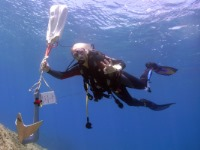 Improve your diving skills with PADI advanced courses and specialties